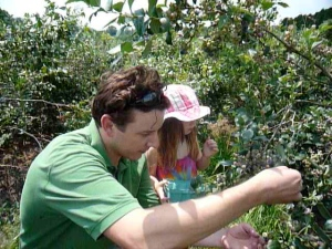 Matt and Nina get busy on another blueberry bush.