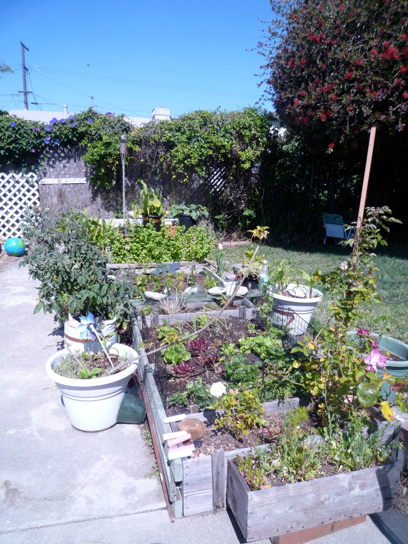 Raised-beds of all sizes and filled with fruits and veggies.