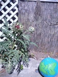 artichoke gone wild.