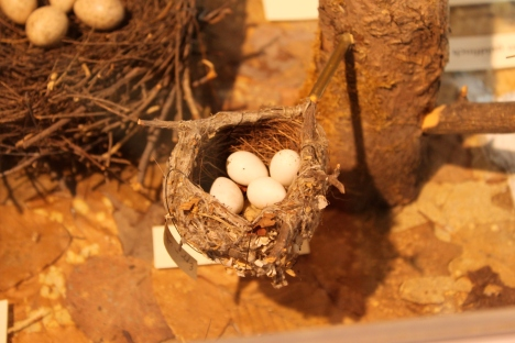 bird's nest at the montshire museum